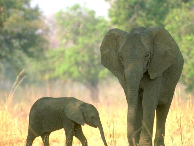 Mastering the Elephant