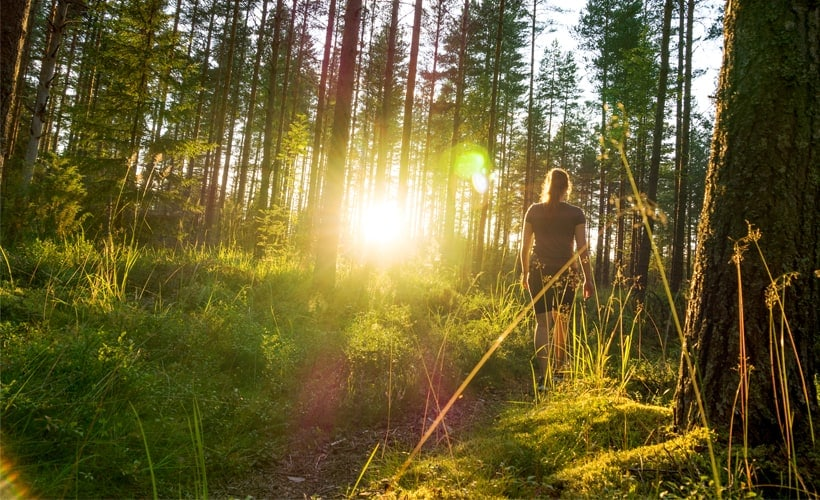 Unlock the Powerful Benefits of 'Forest Bathing'