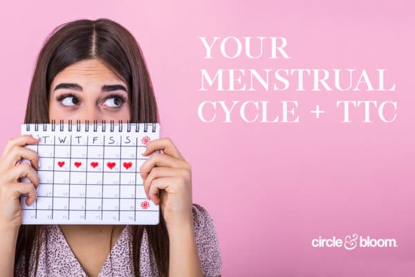 Your Menstrual Cycle and TTC
